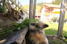 Our rabbits enjoy snacking on the grass