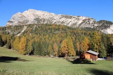 Larch forests in autumn